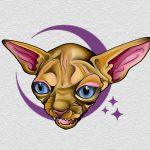 hairless-cat-devon-tattoo-abyss